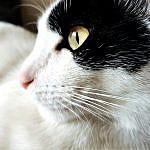 J'agis pour la protection animale en devenant famille d'accueil pour chats
