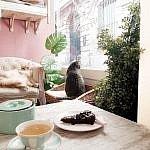 La Maison des Chats à Montpellier : le bar à chats au pays des merveilles