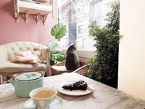 la-maison-des-chats-montpellier