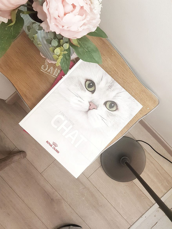 la-maison-des-chats-montpellier-deco-livre