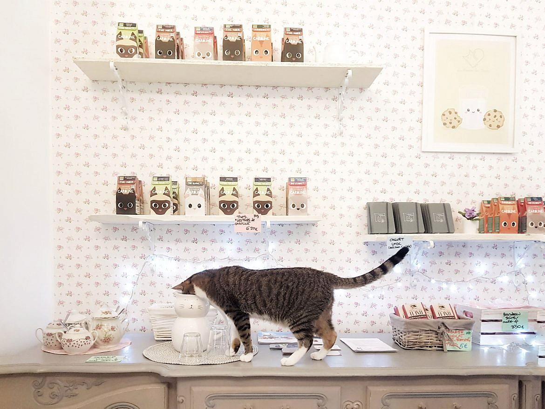 la-maison-des-chats-montpellier-mozart-1