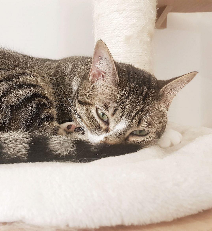 la-maison-des-chats-montpellier-mozart-2