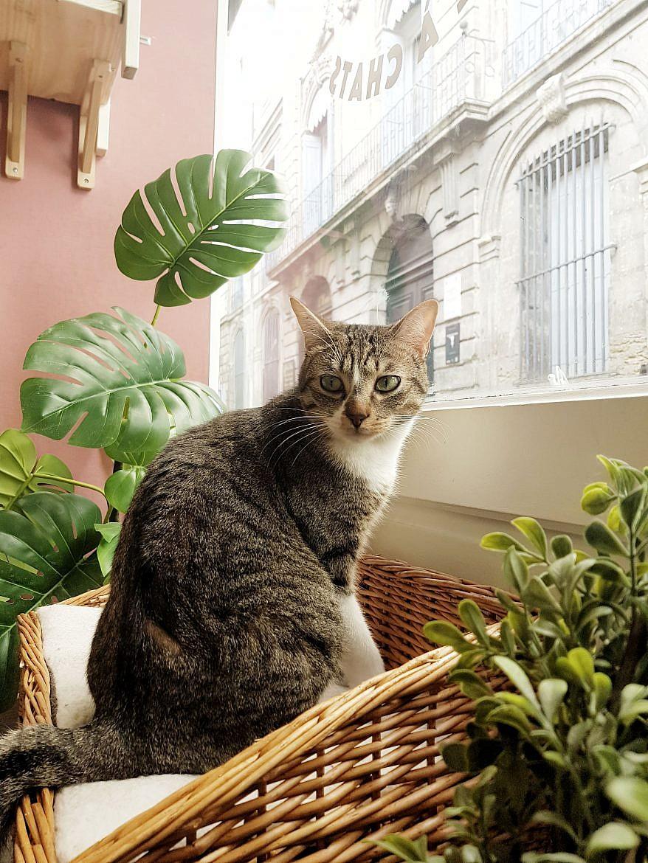 la-maison-des-chats-montpellier-mozart-3