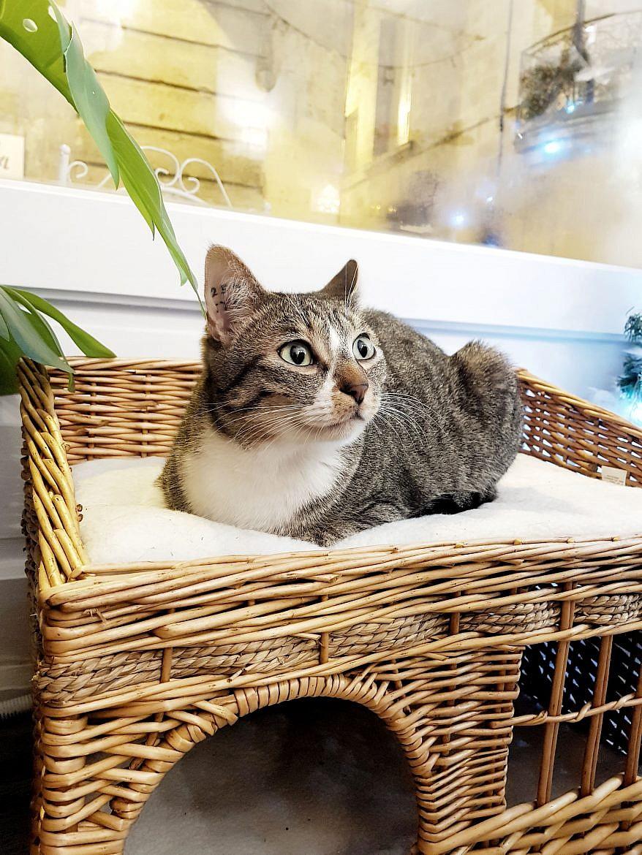 la-maison-des-chats-montpellier-mozart-4