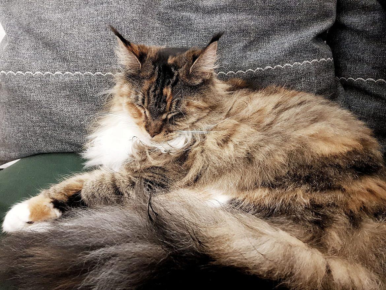 la-maison-des-chats-montpellier-ocarina