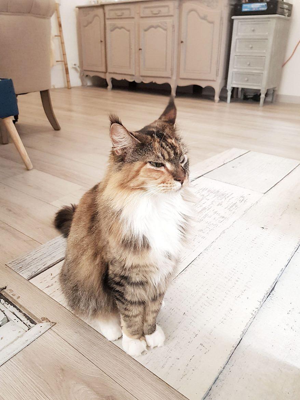 la-maison-des-chats-montpellier-ocarina-3