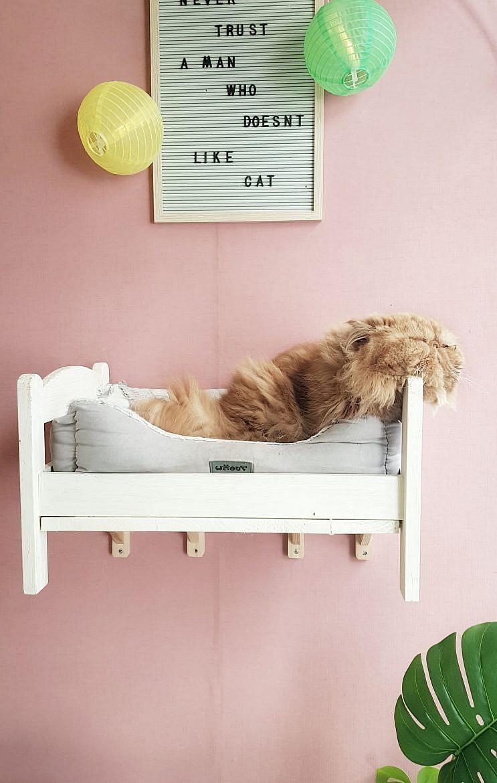 la-maison-des-chats-montpellier-opium