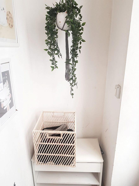 la-maison-des-chats-montpellier-sas