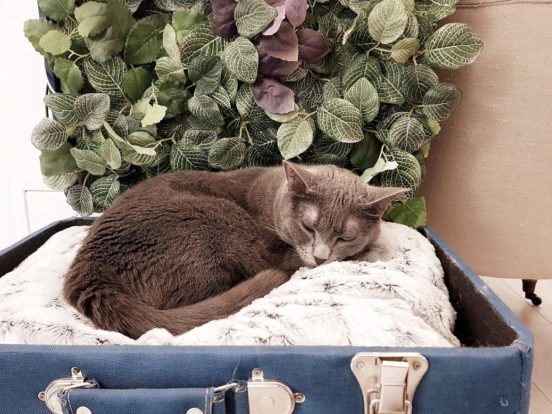 la-maison-des-chats-montpellier-velvet-1