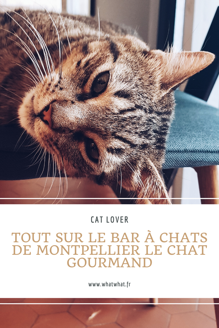 bar-a-chat-le-chat-gourmand-montpellier-pinterest