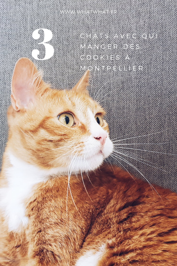 bar-a-chats-montpellier-le-chat-gourmand-pinterest