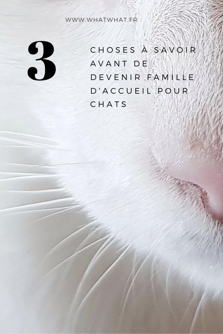 comment-devenir-famille-daccueil-pour-chat-pinterest