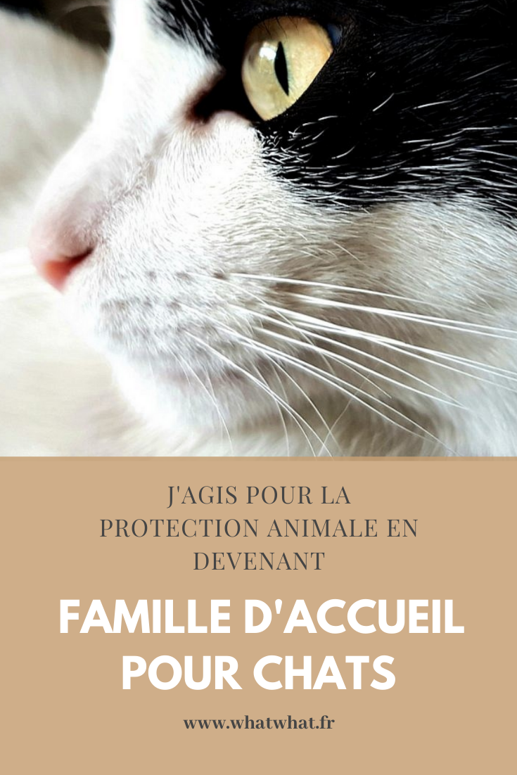 famille-accueil-chat-montpellier-pinterest