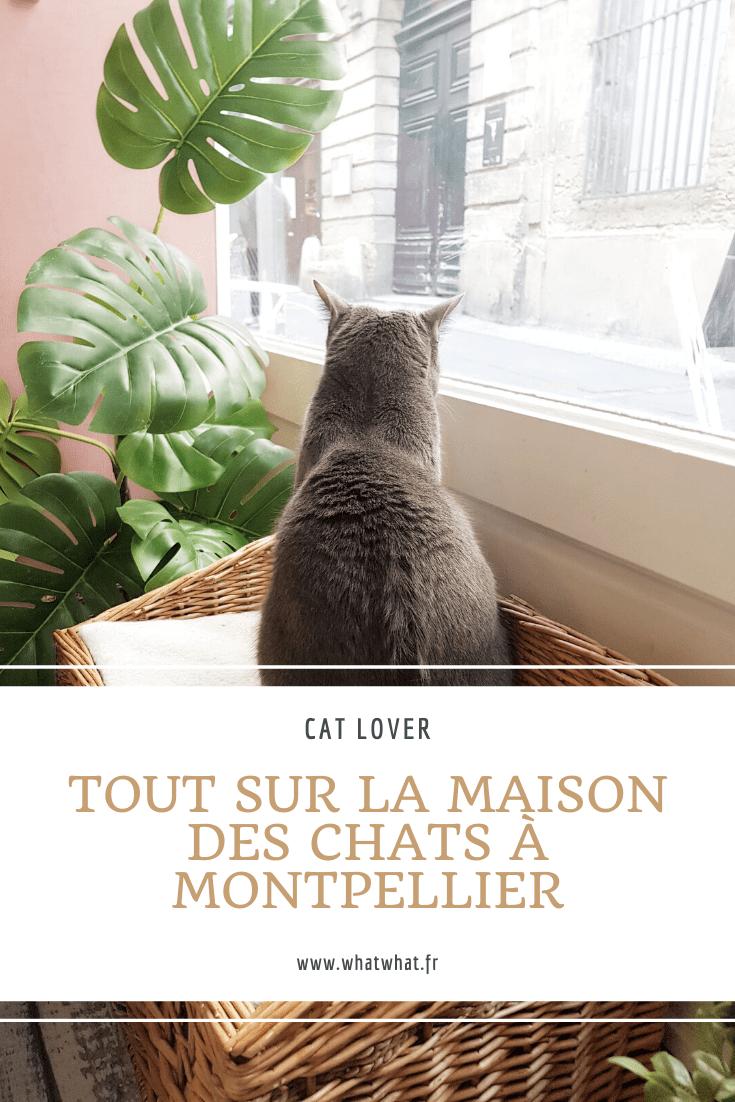 la-maison-des-chats-montpellier-cafe-chats