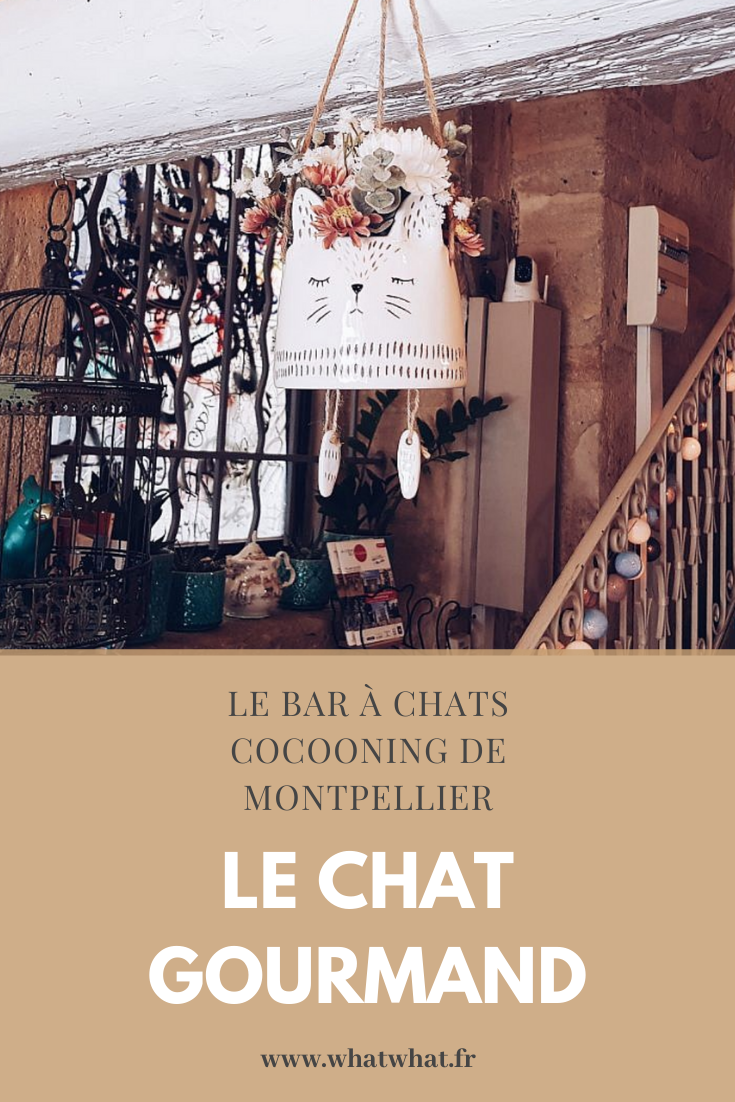 le-chat-gourmand-montpellier-pinterest